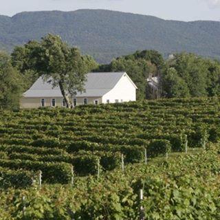 Vineyard Domaine Bresee Sutton