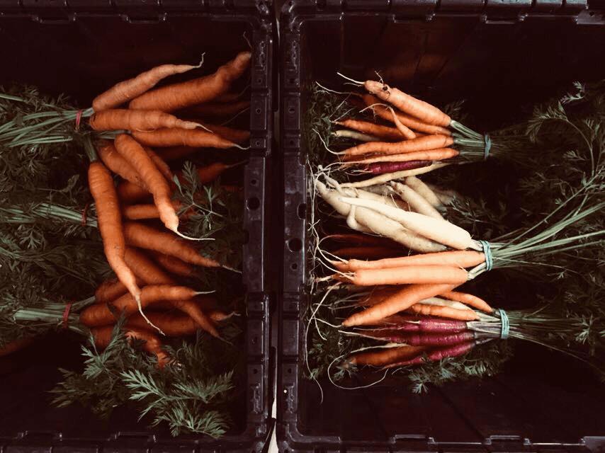 Carottes épicerie Épicerie Les Récoltes montreal, quebec canada Ulocal Produits locaux achat local produits du terroir locavore touriste
