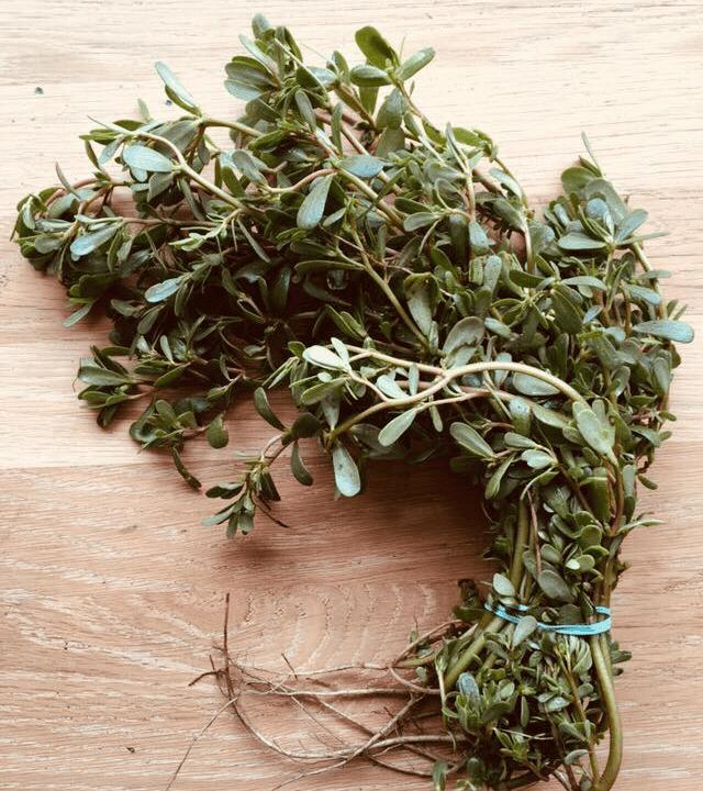 épicerie Épicerie fine herbes Les Récoltes montreal, quebec canada Ulocal Produits locaux achat local produits du terroir locavore touriste