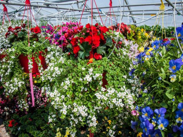 Marché de fruits et/ou légumes Les Jardins Baielactée Saguenay fleures rouge