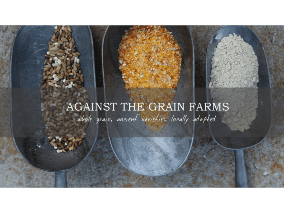 Grains Food Against the Grain Mountain Ontario Ulocal local product local purchase