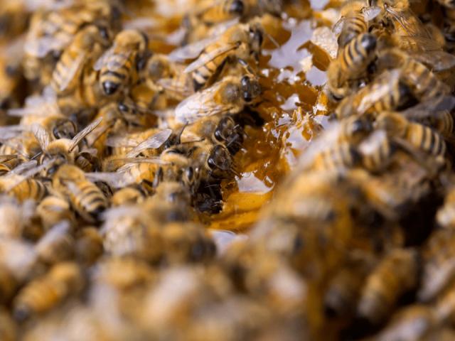 Apiculteur boutique alimentation Miel en mer Havre-aux-Maisons Iles-de-la-Madeleine Abeille miel Ulocal Achat local produit local