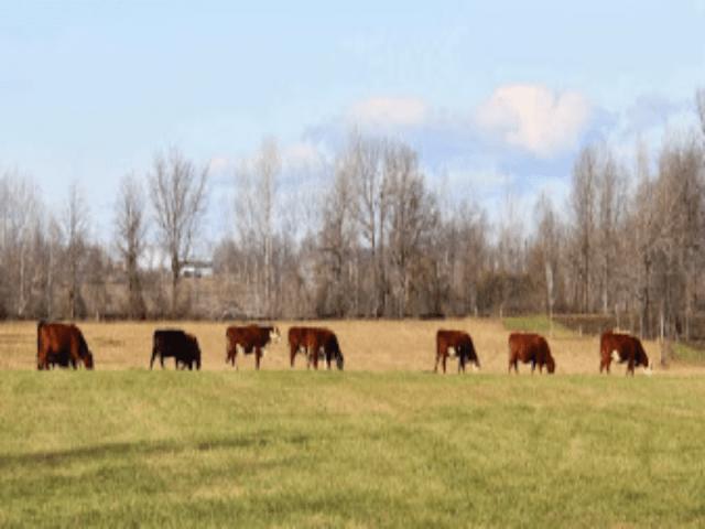 Viande Alimentation Anderson Farms Ashton Ontario Ulocal produit local achat local