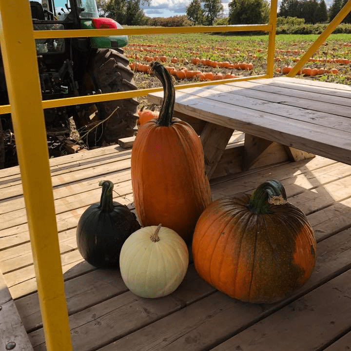 Food produce markets produce picking Avonmore Berry Farm Avonmore Ulocal local product local purchase pumkins