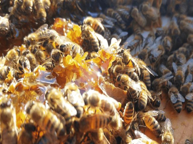 Miel Ferme apicole Mosaïque Saint-Thuribe Ulocal achat local produit local