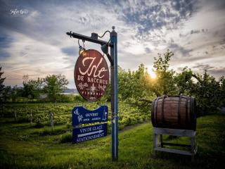 Vignoble Isle de Bacchus Saint-Pierre Ulocal produit local achat local