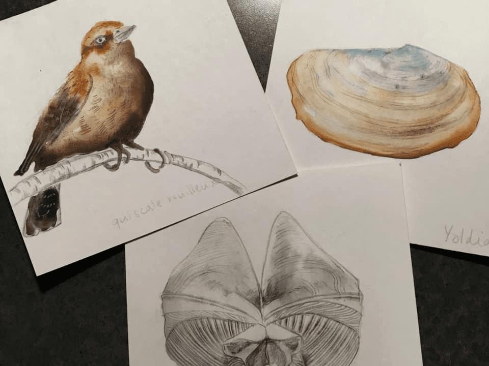 Artisans animaux aimantés Cathy Faucher Illustration Montréal Ulocal produit local achat local