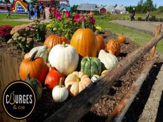 marché fruits et légumes courges citrouilles Courges et cie Gatineau Ulocal produit local achat local