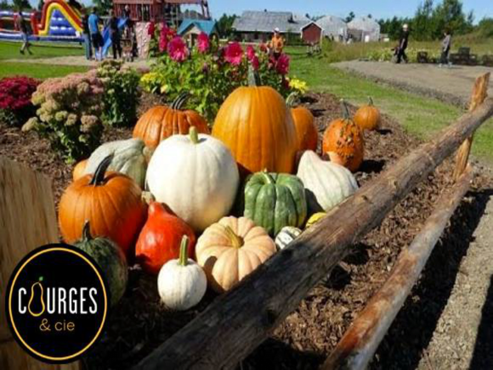 market fruits and vegetables squash pumpkins Courges & cie Gatineau Ulocal local product local purchase
