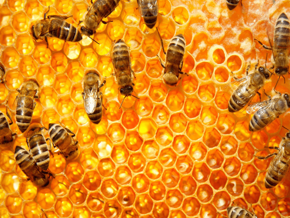 beekeeper bees honey comb Crerar's Honey Ltd. Metcalfe Ulocal local product local purchase