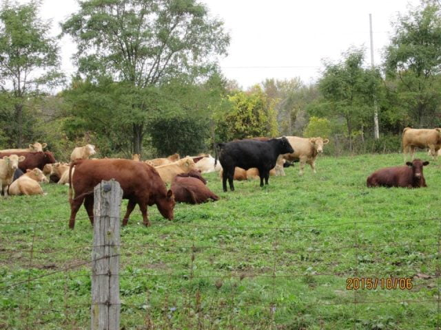 vente viande vaches Eighth Line Farm Athens Ulocal produit local achat local