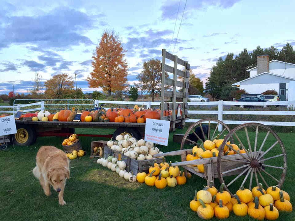 Produce Market pumpkin Ferme Artisan Fournier Ulocal local product local purchase