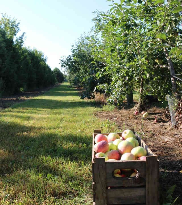 Marché fruits et légumes pommiers pommes Ferme l'Artisan Fournier Ulocal produit local achat local