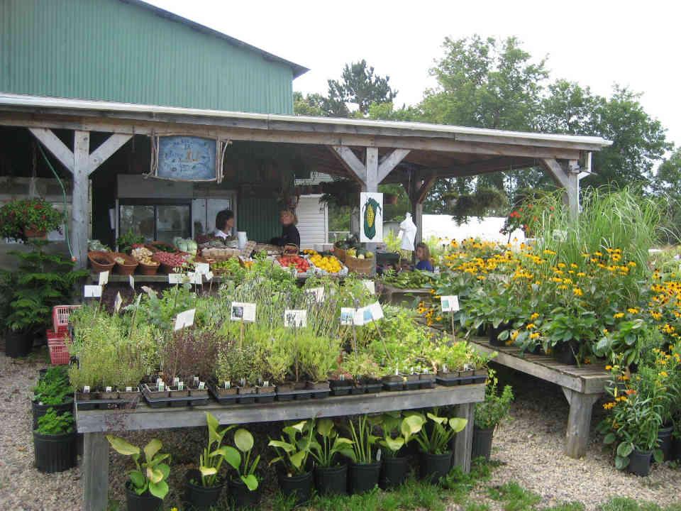 Marché de fruits et légumes kiosque plantes Ferme HLF Chénéville Ulocal produit local achat local
