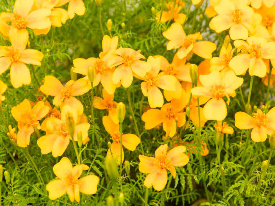 Produce market flowers Les fines herbes par Daniel Saint-François de l'Ile d'Orléans Ulocal local product local purchase