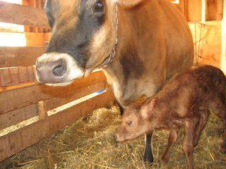 Fermier de famille vaches Funny Duck Farms Jasper Ulocal produit local achat local