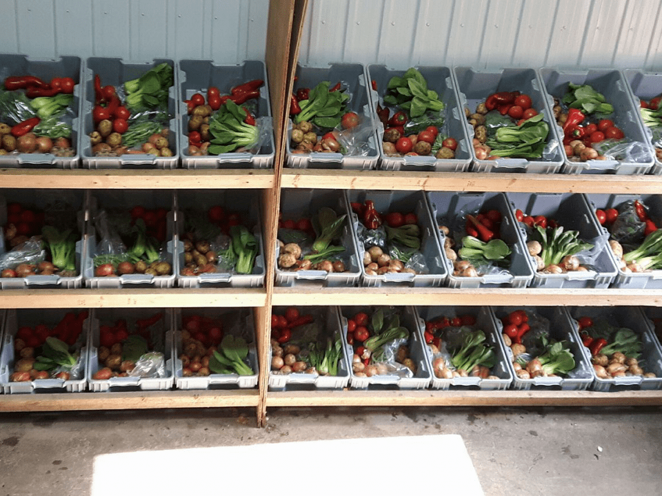 Family Farmers Organic Fruits and Vegetables Potater peasant Sainte-Clotilde-de-Châteauguay Ulocal local product local purchase