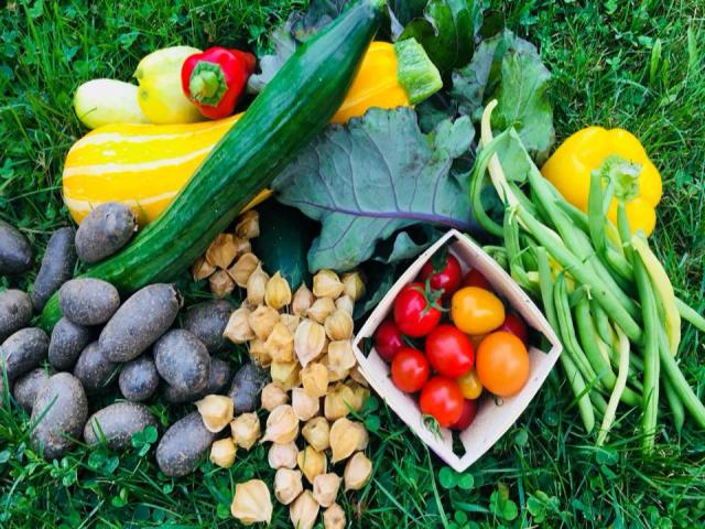 Fermiers de famille marché de fruits et légumes paniers bio Aux jardins de la bergère St-Damien Saint-Gabriel-de-Brandon Ulocal produit local achat local
