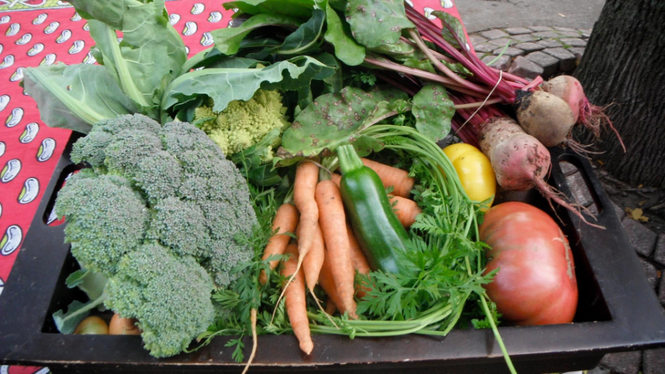 market vegetable Brockville Farmers Market Brockville Ulocal local product local purchase