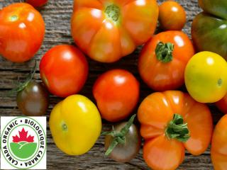 fermier tomates Bryson Farms Shawville Ulocal produit local achat local