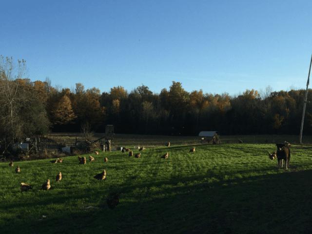 boucherie poules Castor River Farm Ottawa Ulocal produit local achat local