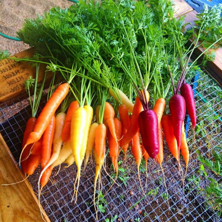 Farmer's Family rainbow carrots C'est la vie Farm Clayton Ulocal Local Product Buy Local