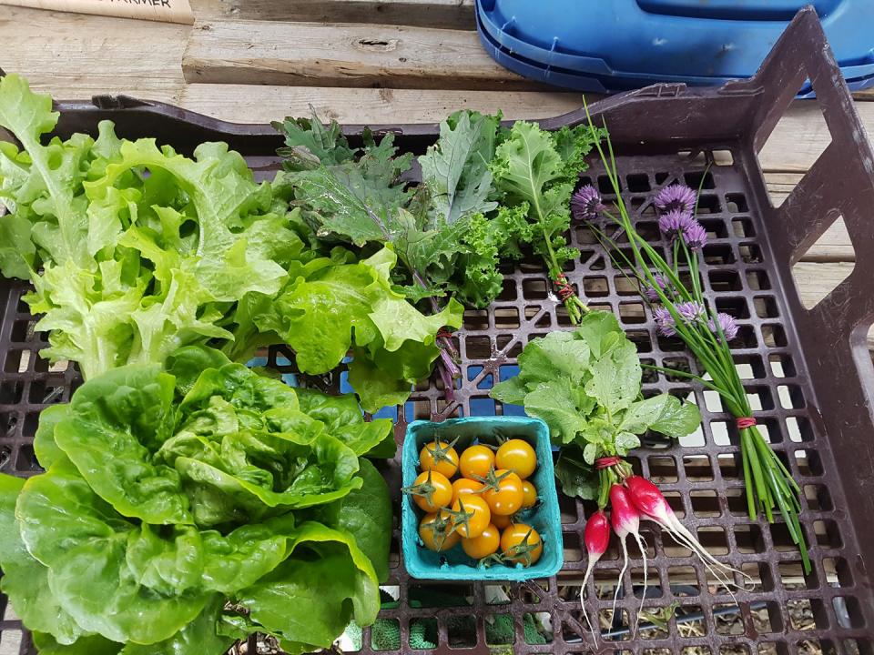 Fermiers de famille marché de fruits et légumes paniers bio Conviction Gourmande Ange Gardien Ulocal produit local achat local