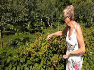 autocueillette champ cueillette Dekok Family Berry Farm Kanata Ulocal produit local achat local