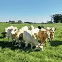 vente de viande boeufs Dobson's Grass Fed Beef Farm Cobden Ulocal produit local achat local