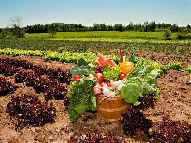 Fermiers de famille fruits et légumes bio Ferme aux pleines saveurs Saint-André-Avellin Ulocal produit local achat local