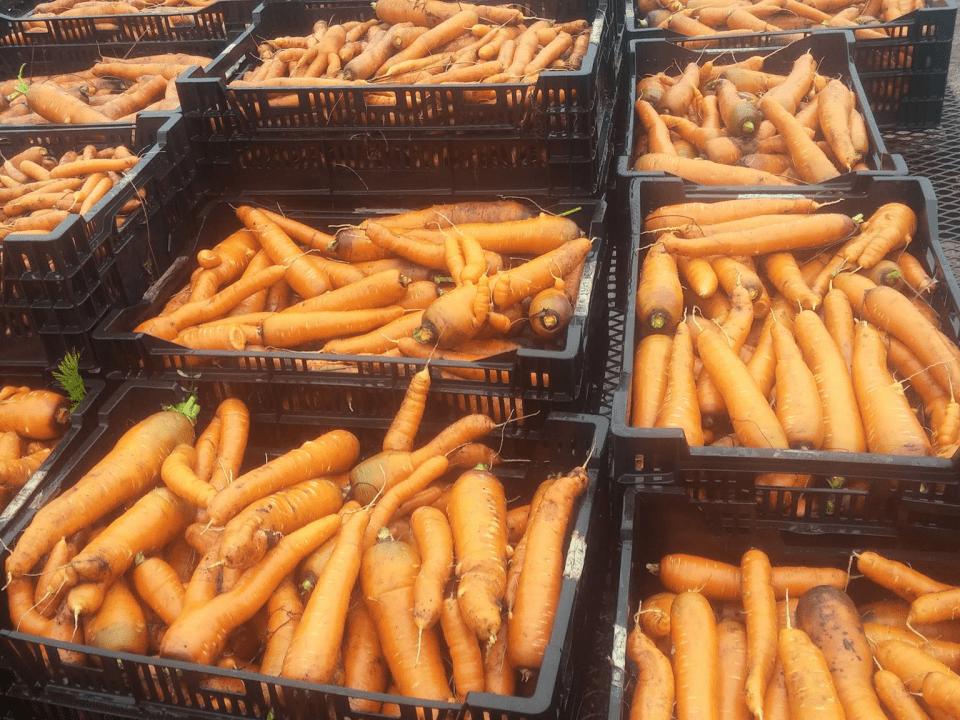 Fermiers de famille fruits et légumes biologique Ferme belle roche Gore Ulocal produit local achat local