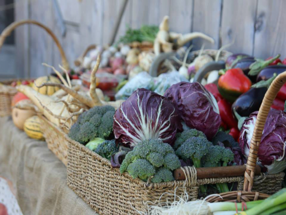Fermiers de famille paniers bio fruis et légumes Ferme coop la Rosée Notre-Dame-de-la-Paix Ulocal produit local achat local