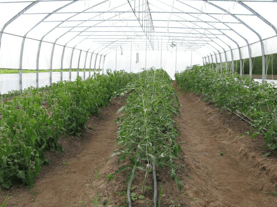Fermiers de famille paniers bio fruits et légumes Ferme de la Rondine Joly Ulocal produit local achat local