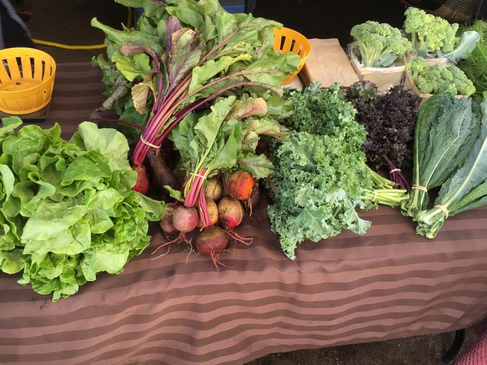 Fermiers de famille paniers bio légumes Ferme des Libellules Saint-Didace Ulocal produit local achat local