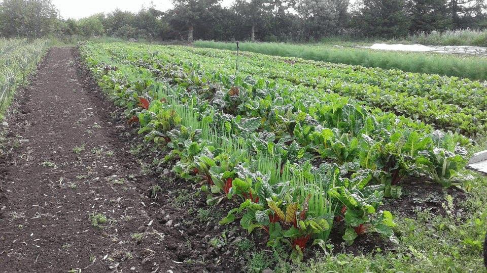 Fermiers de famille paniers bio légumes Ferme des Pensées Sauvages Saint-Aubert Ulocal produit local achat local