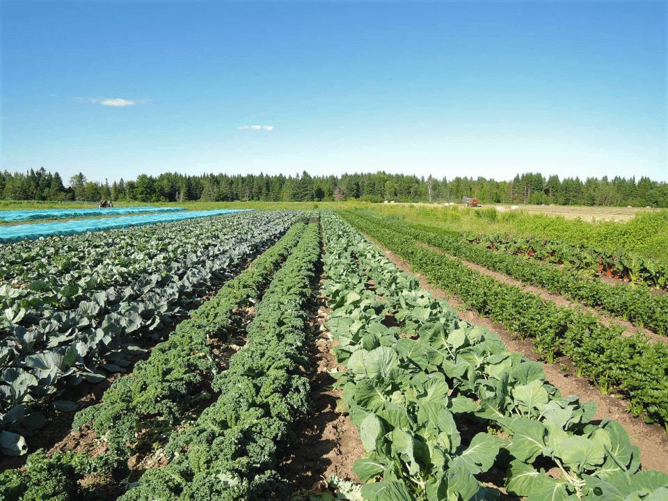 Fermiers de famille panier bio fruits et légumes Ferme du Coq à l'Âne de Bury Bury Ulocal produit local achat local