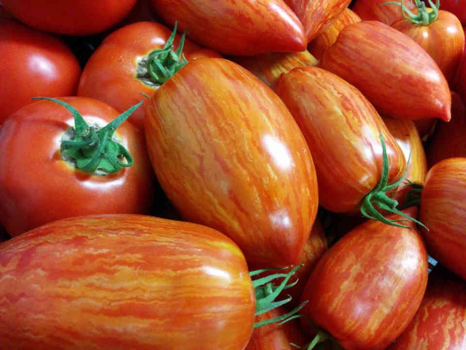 Fermiers de famille paniers bio fruits et légumes herbes Ferme La Chouette Lapone Proulxville Ulocal produit local achat local