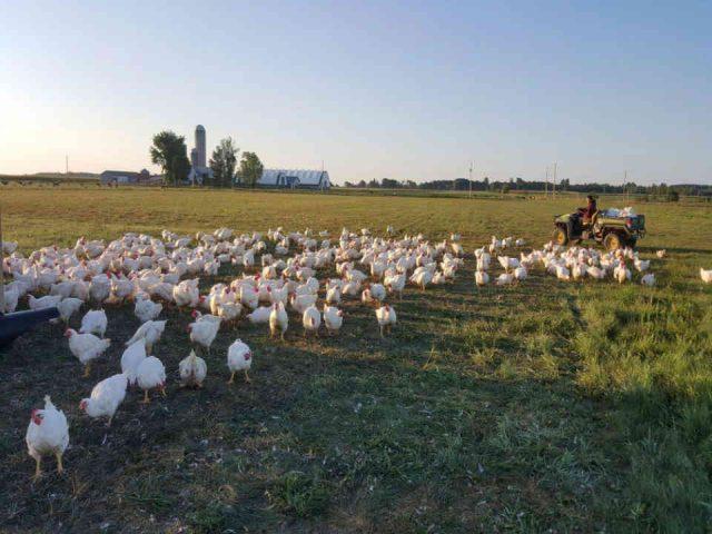 vente de viande poules Ferme Rêveuse Curran Ulocal produit local achat local