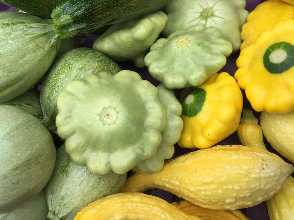 Fermiers de famille fruits et légumes bio Jardins de la Rivière Maskinongé Saint-Didace Ulocal produit local achat local