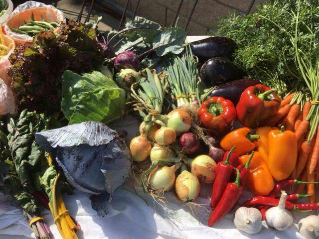 Fermiers de famille paniers bio fruits et légumes Jardins la Clé du Sol Saint-Bernard-de-Lacolle Ulocal produit local achat local