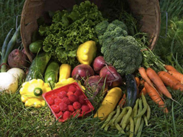 Fermiers de famille fruits et légumes bio Jeunes au travail Laval Ulocal produit local achat local