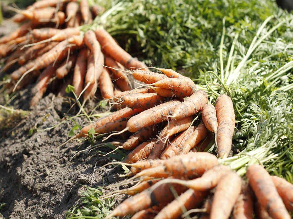 Fermiers de famille fruits et légumes bio La Fibre Végétale Saint-Denis-sur-Richelieu Ulocal produit local achat local