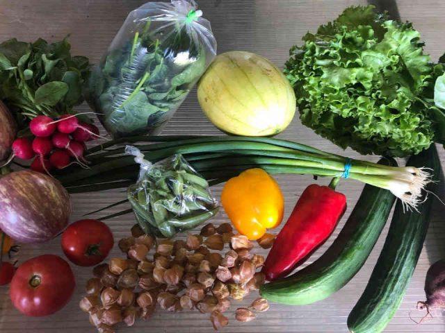 Fermiers de famille paniers bio fruits et légumes La Gauloise ferme maraîchère Sainte-Monique Ulocal produit local achat local
