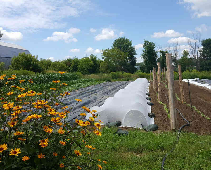 Fermiers de famille paniers bio fruits et légumes La Réserve Saint-Pie Ulocal produit local achat local