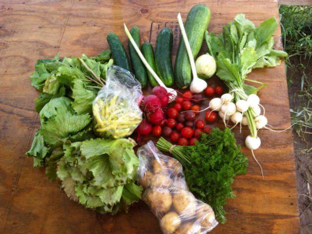 Fermiers de famille paniers bio fruits et légumes La shop à légumes Coop Saint-Esprit Ulocal produit local achat local