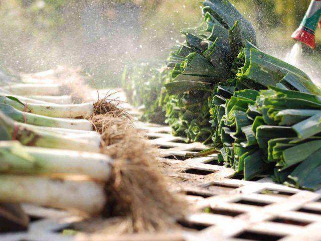 Fermiers de famille paniers bio fruits et légumes Le Filon maraîcher Saint-Gilles Ulocal produit local achat local