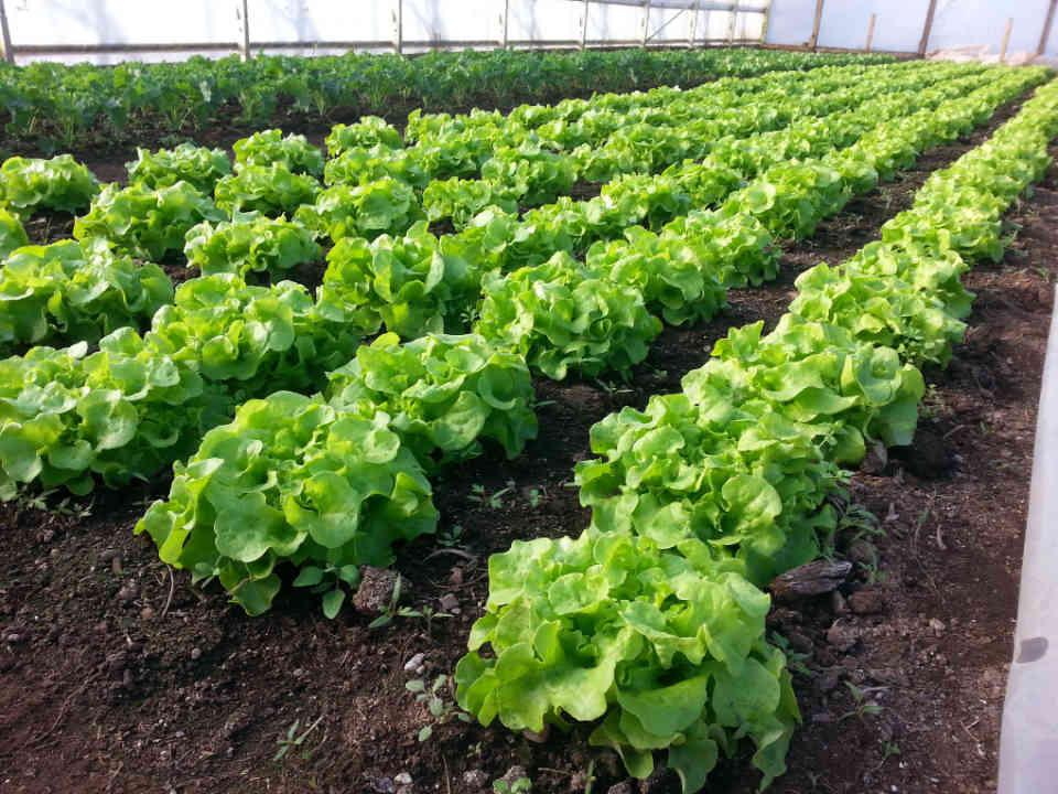Fermiers de famille alimentation fruits et légumes bio paniers bio Le jardin du village Caplan Ulocal produit local achat local