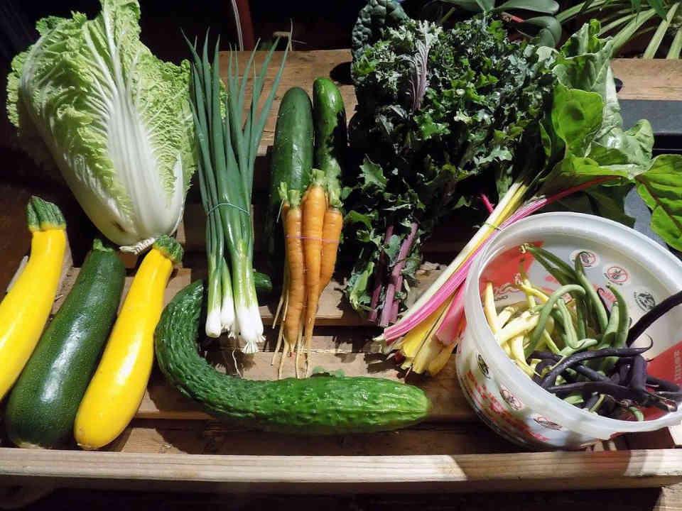 Fermiers de famille paniers bio légumes bio alimentation Le pied maraîcher, ferme artisanale Saint-Alexis Ulocal produit local achat local