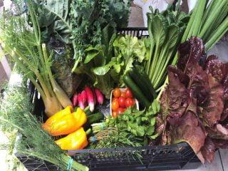 Fermiers de famille fruits et légumes bio Les Éco Jardins Rive-Sud Sainte-Julie Ulocal produit local achat local