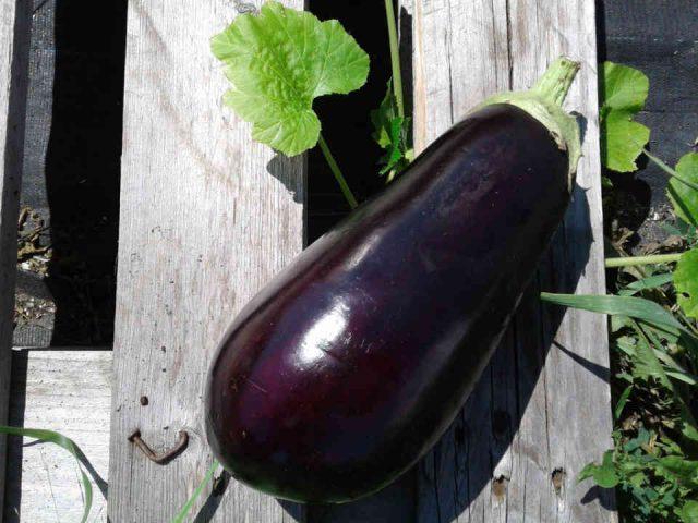 Fermiers de famille panier bio fruits et légumes Les Jardins de la Chevrotière Deschambault Ulocal produit local achat local